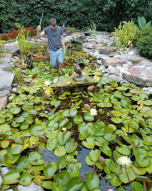 Pond Cleaning Springer Ponds